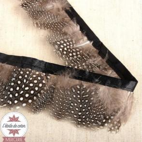 Galon plumes véritables sur satin - noir/beige